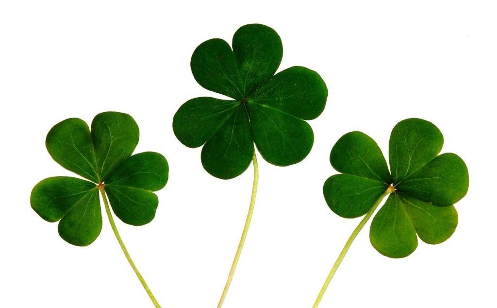 clover, shamrocks, irish
